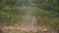 WS SLO MO Shot of Watermelon exploding / United Kingdom