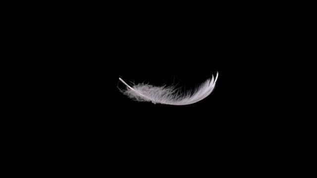 MS SLO MO Shot of white feather falling against black background / Calvados, Normandy, France
