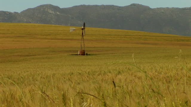 MS ZO Shot of windmill in wheat field with rural road / Western Cape, South Africa