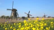 WS Shot of Windmills of Kinderdijk at UNESCO World Heritage Site / South Holland, Netherlands