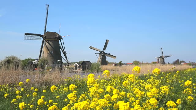 WS Shot of Windmills of Kinderdijk at UNESCO World Heritage Site / South Holland, Netherlands