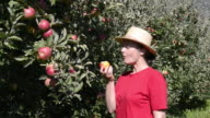 MS Shot of woman picking and eating red apple from tree / Merano, Trentino, South Tyrol, Italy
