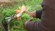 CU Shot of women washing carrots in community garden in Cape Flats Township / Cape Town, South Africa