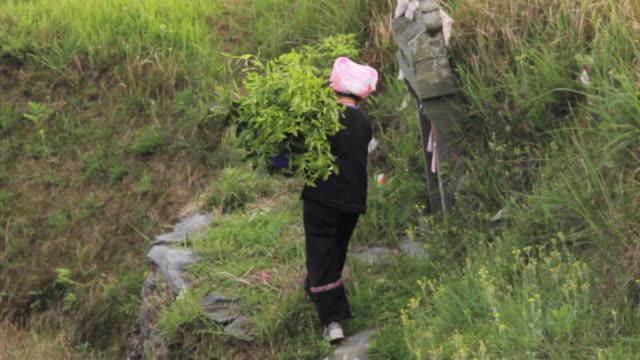 MS TS Shot of Women working in farm area / Yao Village, Huangluo, China