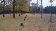 Shot of yellow ginkgo trees in a row and fallen ginkgo leaves at the Namiseom island in the autumn