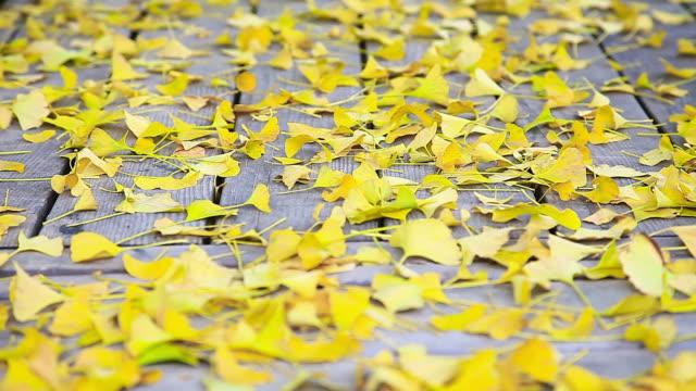 CU Shot of Yellow Ginko leaves falling to wooden floor / Chuncheon, Gangwondo, South Korea