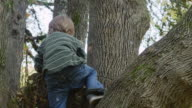 MS TS Shot of young boy climbing tree and looking out / Hillsboro, Oregon, United States