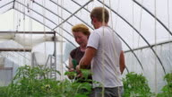MS SLO MO Shot of Young couple tends to plants in green/hoop house at organic farm / Chatham, Michigan, United States