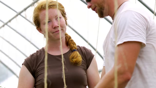 CU SLO MO Shot of Young couple tends to plants in green/hoop house at organic farm / Chatham, Michigan, United States
