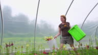 MS SLO MO TS Shot of Young woman carries picked flowers in green/hoop house / Chatham, Michigan, United States