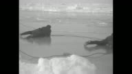 Shot on board Robert Bartlett's ship 'Effie M Morrissey' as it sails along / wide shot from ship of members of expedition walking across ice / men...