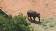 MS AERIAL Shot over elephant at zoo / Bloemfontein, Free State, South Africa