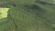WS AERIAL ZI Shot over tree farm / Brasilia, Brazil