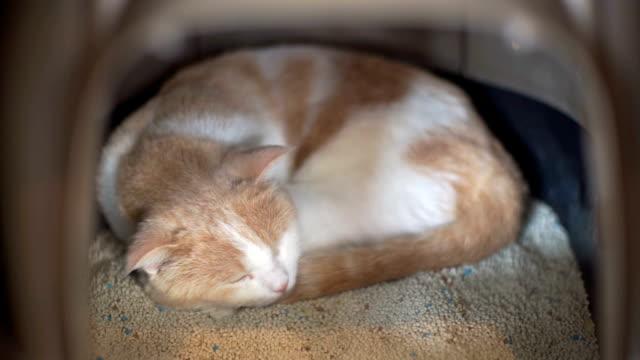 2 shots van kat slapen in de kattenbak