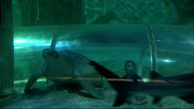 Shots of Ernie the green sea turtle at Hunstanton Sea Life Sanctuary