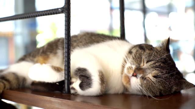 3 shots van Sleeping Cat in drukke verkeer achtergrond