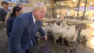 Shows interior shots Conservative MPs and 'Out' Campaigners Boris Johnson and Priti Patel visiting farmer's cattle auction looking at livestock...