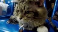 Kranke Katze an den Tierarzt