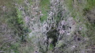 Side tracking over birds in nest swamp - Drone Aerial 4K Everglades, Swamp bayou with wildlife alligator nesting Ibis, Anhinga, Cormorant, Snowy Egret, Spoonbill, Blue Heron, eagle, hawk, cypress tree 4K Nature/Wildlife/Weather