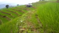 Seitenansicht der kleinen Hütte, die Reis Terrasse gehören ist