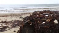 Sierra Leone has some of the finest beaches in the world but many around the capital are now clogged with foul smelling seaweed that threatens the...