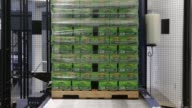 Sierra Nevada Pale Ale cases of cans wrapped in plastic before entering warehouse packaging employees drive forklifts through palletized beer waiting...