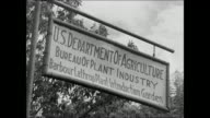 Sign 'US Dept of Agriculture' VS Farmer bamboo trees WS Farmers planting tung trees CU Leaves of tung tree WS Ford experimental plantation WS Ford...