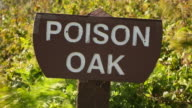 A sign with Poison Oak blowing behind it on a sunny day.