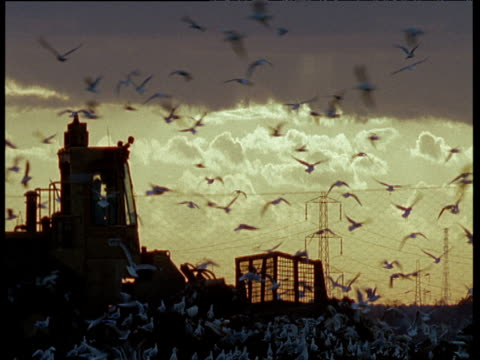Silhouette of bulldozer as it rolls over waste dump and reverses out of shot while seagulls swarm the area