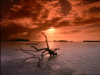 Silhouette of driftwood on beach at sunset