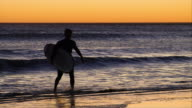 MS, PAN, Silhouette of surfer carrying surfboard in ocean at sunset, Venice, California, USA