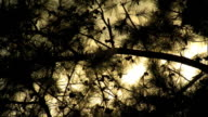 Silhouette of tree leaves branches BRIGHT GOLD COLORED sun light behind tree