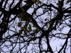 Silhouette of twisted branches of tree shaking in wind against gloomy winter sky