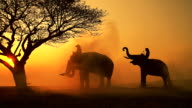 Silhouette scene of elephant and mahout on the mist sunrise.