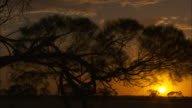Silhouette shot of a tree at sunset.