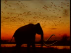 Silhouetted mammoth walks in front of waterfowl flocks and swamp at sunset North America