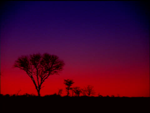 Silhouetted trees under red sky at sunset, Botswana
