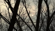 MS Silhouettes of bare trees swaying on wind against sky at dusk / Seoul, South Korea