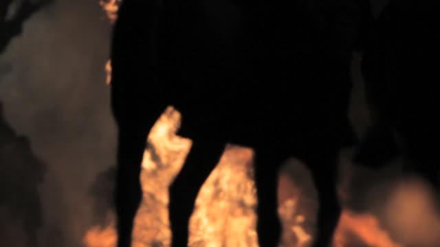 M/S Silhouettes of legs of horses walking through bonfires