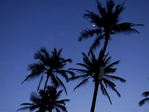 MS, LA, Silhouettes of palm trees against sky at dawn Jericoacoara, Brazil