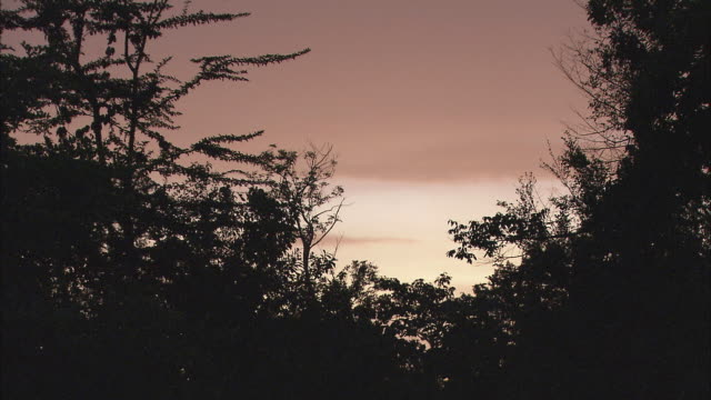 T/L MS Silhouettes of trees against sky, dusk to night / Siem Reap Province, Cambodia