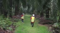 A Sime Darby Bhd employee carries a harvesting pole as he walks through the company's palm oil plantation in Pulau Carey Selangor Malaysia on...