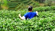 Singing and picking tea