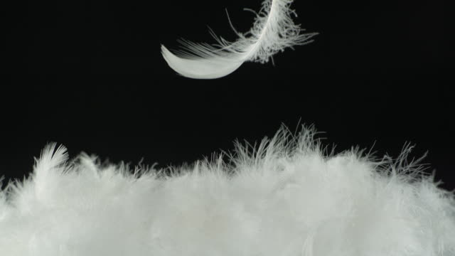 Single feather falling on to feathers, black background, wide