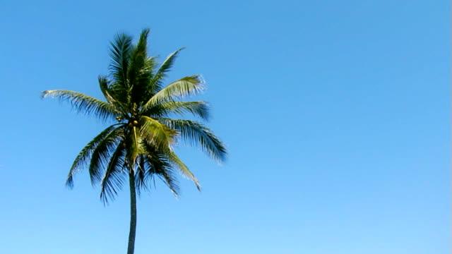 Single palm in skyline