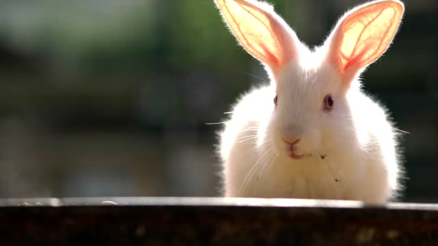 Single rabbits