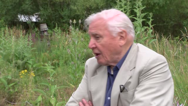 Sir David Attenborough interview ENGLAND London EXT Sir David Attenborough interview SOT on decline of butterflies / looking after the natural world...