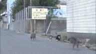 Six cats variously running or walking along a street, Ainoshima, Fukuoka, Japan
