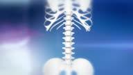 HD: Skeleton Indicates Injured Spine