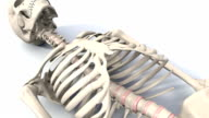 Skeleton lying down, animation